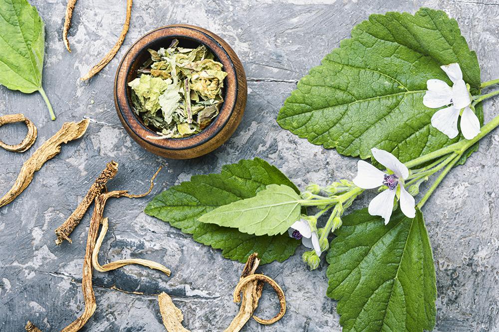 El poder de las plantas, plantas medicinales ebook